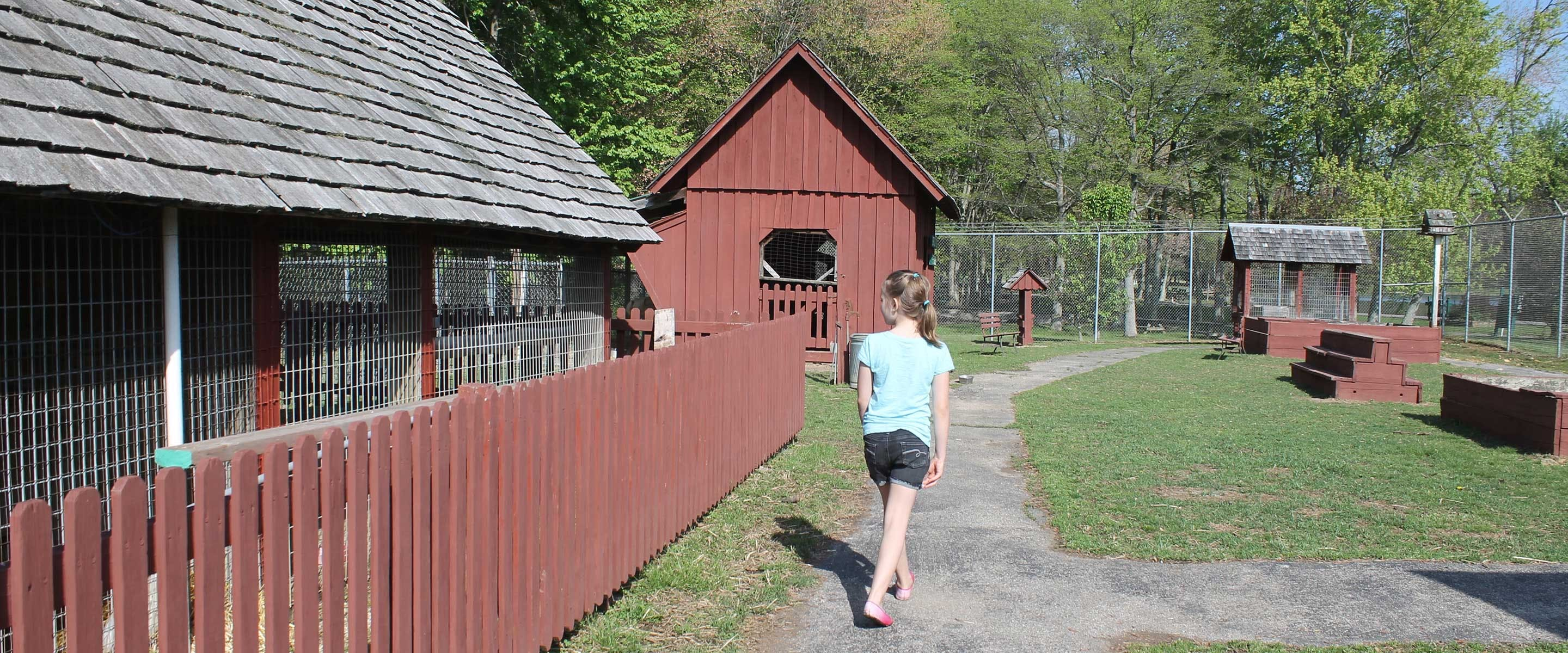 girl walking the petting zoo area